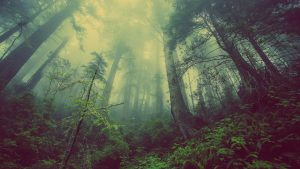 forest 931706 1920 300x169 - Why Global Sustainability Is The Need Of The Hour?